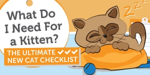 What Do I Need For a Kitten? The Ultimate New Cat Checklist