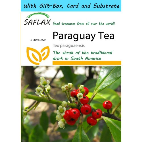 Saflax Gift Set - Paraguay Tea - Ilex Paraguaensis - 10 Seeds - with Gift Box, Card, Label and Potting Substrate