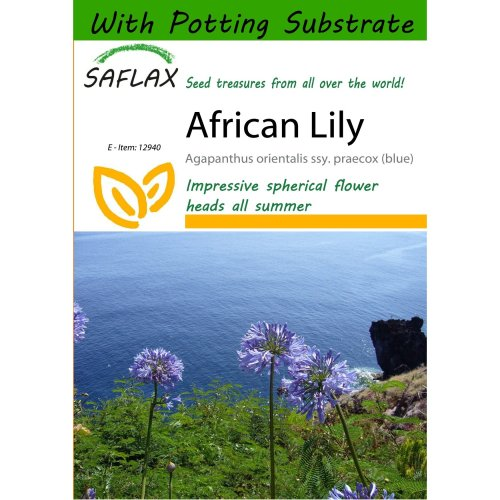 Saflax  - African Lily - Agapanthus Orientalis Ssy. Praecox (blue) - 50 Seeds - with Potting Substrate for Better Cultivation