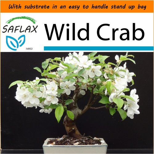 SAFLAX Garden in the Bag - Bonsai - Wild Crab - Malus - 30 seeds