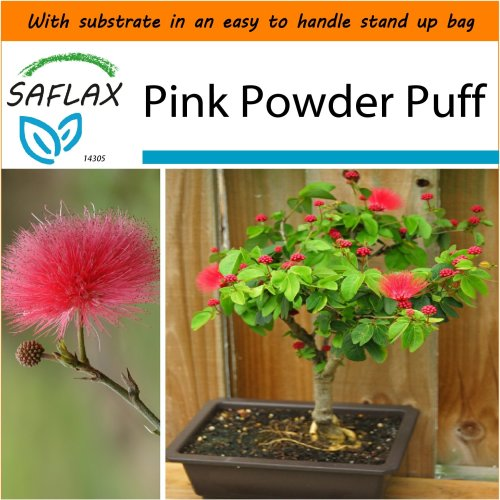 SAFLAX Garden in the Bag - Bonsai - Pink Powder Puff - Calliandra - 10 seeds