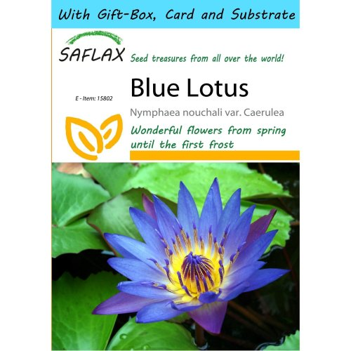 Saflax Gift Set - Blue Lotus - Nymphaea Nouchali Var. Caerulea - 15 Seeds - with Gift Box, Card, Label and Potting Substrate