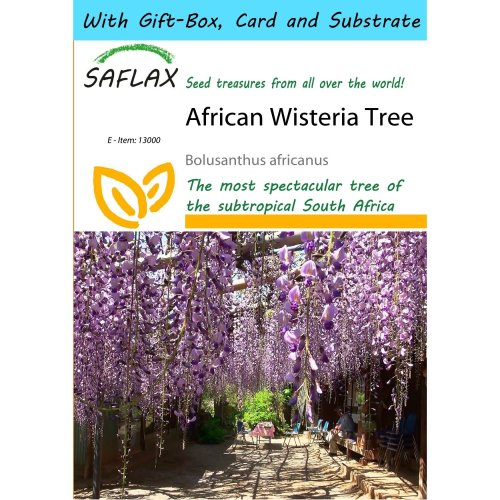 Saflax Gift Set - African Wisteria Tree - Bolusanthus Africanus - 10 Seeds - with Gift Box, Card, Label and Potting Substrate