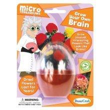 Dunecraft Grow Your Own Brain Science Kit