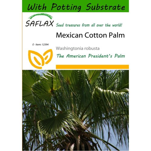 Saflax  - Mexican Cotton Palm - Washingtonia Robusta - 12 Seeds - with Potting Substrate for Better Cultivation