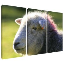 Punk Sheep Head Canvas Wall Art Print 3 Panel Split Picture