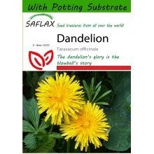 Saflax  - Dandelion - Taraxacum Officinale - 200 Seeds - with Potting Substrate for Better Cultivation