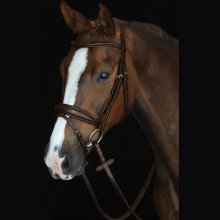 Collegiate Mono Crown Padded Raised Flash Bridle: Brown: Warmblood
