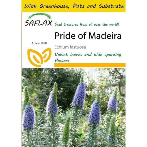 Saflax Potting Set - Pride of Madeira - Echium Fastuosa - 100 Seeds - with Mini Greenhouse, Potting Substrate and 2 Pots