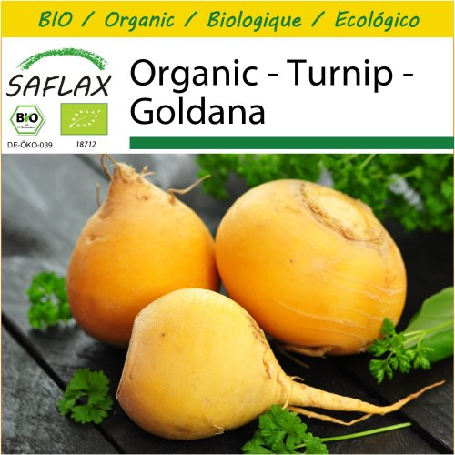 SAFLAX Potting Set - Organic - Turnip - Goldana - 500 certified organic seeds  - Brassica